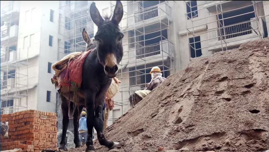 Afgedankte ezels en tere kinderzieltjes